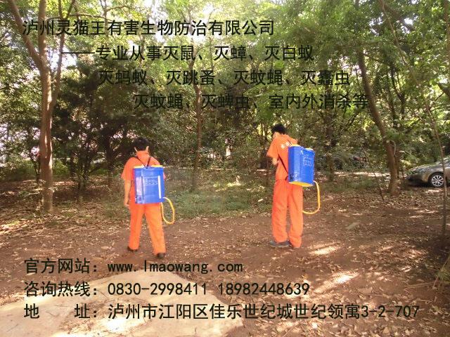 靈貓王圖片.jpg